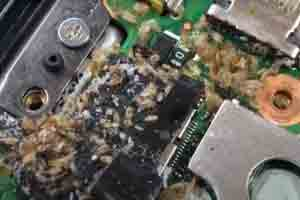 picture of bed bugs in electronics circuit
