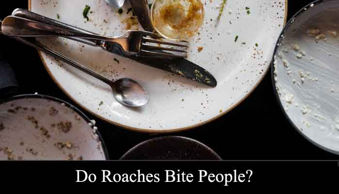 do roaches bite people