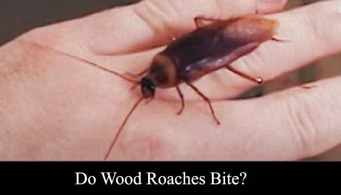 do wood roaches bite