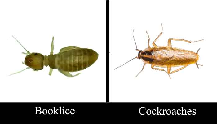 booklice cockroaches